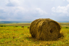 Hay harvesting Royalty Free Stock Image