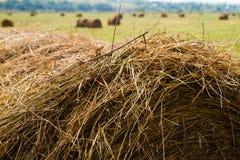 Hay harvesting Royalty Free Stock Photo
