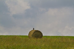 Hay harvesting Stock Images