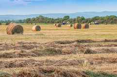 Hay harvesting in the field Stock Image