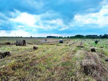 Hay harvesting in Siberia royalty free stock photos