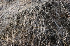A haystack on a stretch in the old village Royalty Free Stock Photos