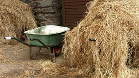 Hay in the horse stable stock video