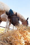 Hay horses. The clods of horse hay grounded Royalty Free Stock Photography
