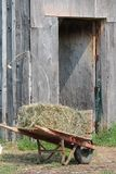 Hay for the horses royalty free stock photos