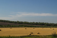 Hay in the hot summer Royalty Free Stock Images