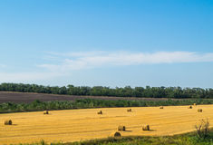 Hay in the hot summer Stock Photography