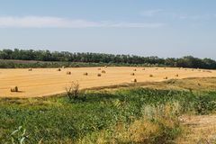 Hay in the hot summer Royalty Free Stock Image
