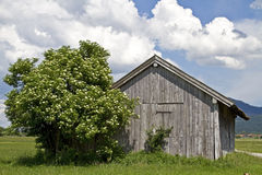 Hay hut and elderberry bush Royalty Free Stock Photography