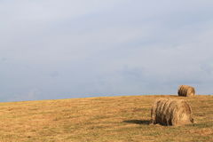 Hay In Field 2 Stock Image