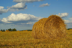 Hay landscape. Hay bales on a golden field with blue sky and white clouds Stock Photos