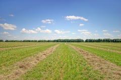 Hay lines Stock Image