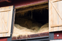 Hay on the loft. Stored hay on the loft area of an old farmhouse. Hatches are open and inside it is dark with lots of fresh hay as winter food for the animals Stock Image