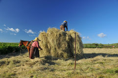 Hay making Stock Photography