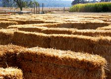 Hay Maze. A Hay Maze that children enjoy finding their way through during the Halloween season Stock Images