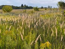 Hay Meadow Stockfoto