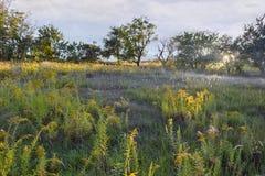 Hay Meadow Lizenzfreies Stockbild
