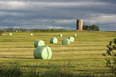 Hay on the meadow Royalty Free Stock Photos