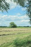 Hay on a meadow at Havel river in Havelland (Brandenburg, German Royalty Free Stock Photos