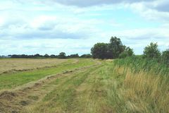 Hay on a meadow at Havel river in Havelland (Brandenburg, German Stock Image