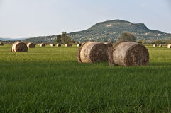 Hay meadow with old volcano as background Stock Image