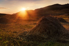 Hay on a meadow Stock Image