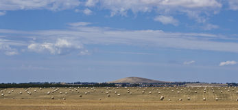 Hay meadow under hill near Dubbo, New South Wales, Australia. Stock Image