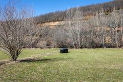 Hay meadows and poplar groves Stock Photo