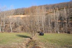 Hay meadows and poplar groves Stock Photos
