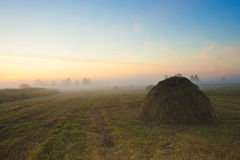 Hay. Morning. Dawn. Mowed grass. Mowed grass at sunrise in haystacks Stock Photo