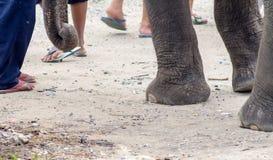 Hay muchos elefantes perdidos en Asia Imágenes de archivo libres de regalías