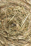 Hay nest texture Stock Photo