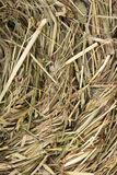 Hay nest texture Royalty Free Stock Image
