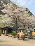 Hay on the old cart of wood. Under a blossoming cherry tree Royalty Free Stock Photos
