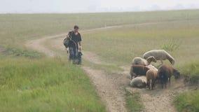 Hay opinión el pastor y la pequeña multitud de ovejas almacen de metraje de vídeo