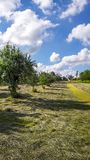 Hay in an Orchard. Beautiful orchard during the haying season is portrayed in this image royalty free stock photos