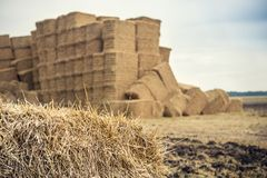 Hay packed compacted into square bales. Hay packed rectangular sheaves on the field Royalty Free Stock Photo
