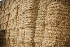 Hay packed compacted into square bales. Hay packed rectangular sheaves on the field Royalty Free Stock Photography