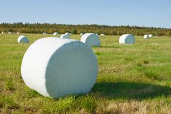 Hay is packed into a white material Stock Photos