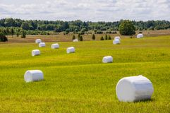 Hay packed in white polyethylene bags on the fields. Landscape photography of mown and packed hay on the fields. Lithuanian agriculture stock photography