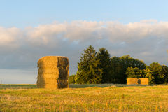 Hay packs drying in the fields Royalty Free Stock Image