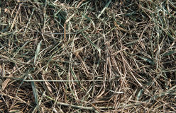 Hay in the pasture Royalty Free Stock Image