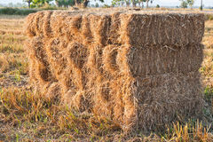 Hay pile at the countryside Royalty Free Stock Photography