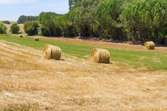 Hay pile in a farm field in Vale Seco, Santiago do Cacem Stock Images