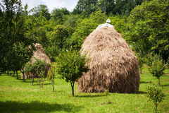 Hay piles in garden Royalty Free Stock Photos