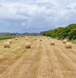 Hay piles panorama Royalty Free Stock Photography