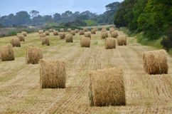 Hay piles panorama Royalty Free Stock Photo