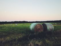 Hay portrait. Artsy image of hay royalty free stock images