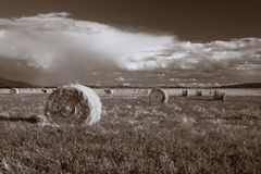 Hay on the prairie. Image of large bundles of hay in the field Royalty Free Stock Photos