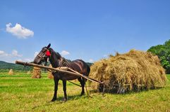 Hay preparation Royalty Free Stock Photo
